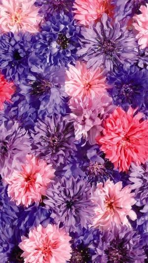 hinh-nen-iphone-5-hoa-dep-flower-9