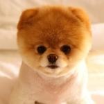 hinh-nen-cun-con-puppy-de-thuong-info