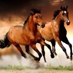 hinh-nen-ngua-horse-dep-cho-may-tinh